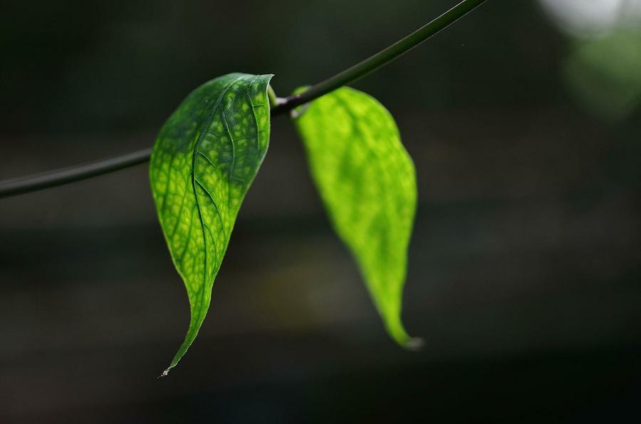 Reproduccion asexual de las plantas por hojas de arboles