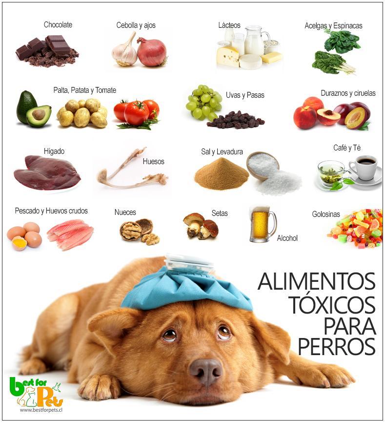alimentos tóxicos para perros