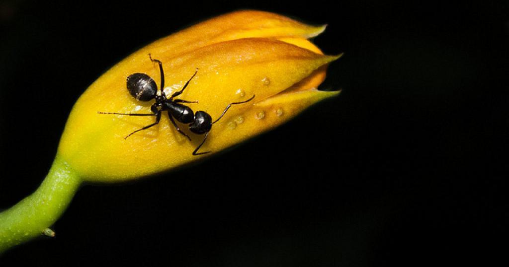 Las hormigas en tu jardín jamás volverán a ser un problema