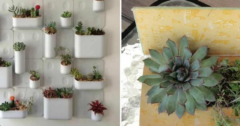 Cómo decorar con nuestra colección de suculentas