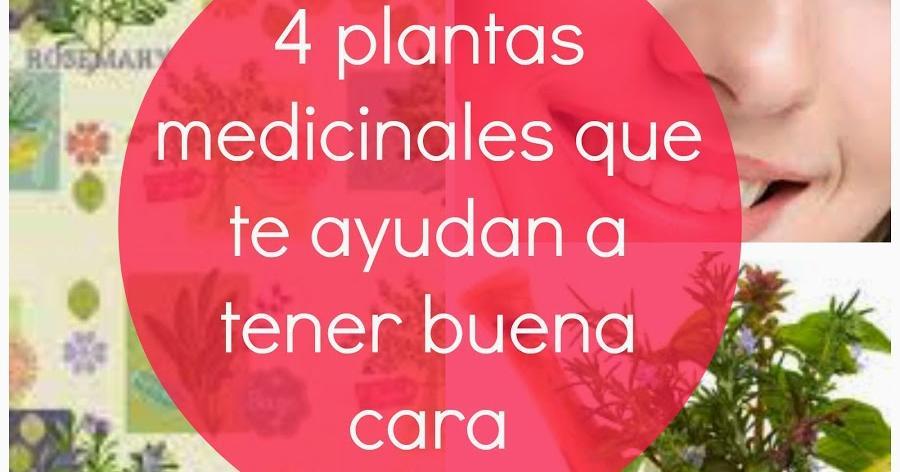 4 plantas medicinales que te ayudarán a dormir y tener buena cara