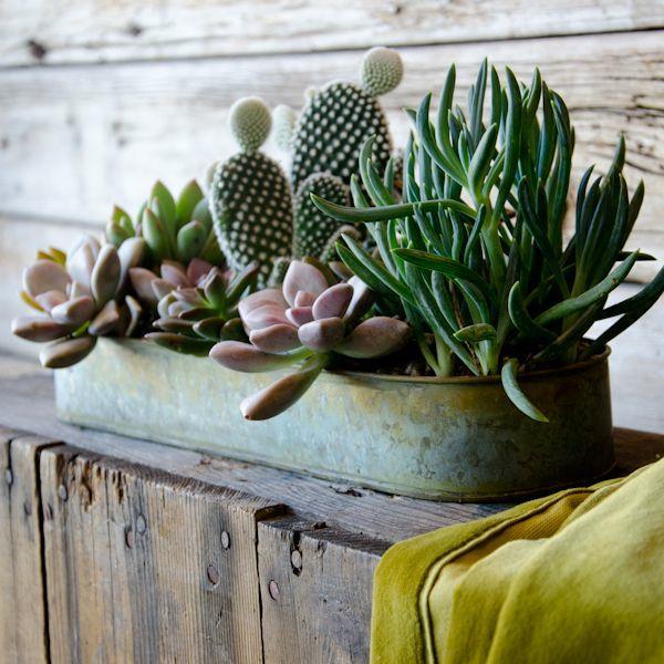 Decorar con cactus, fácil y económico
