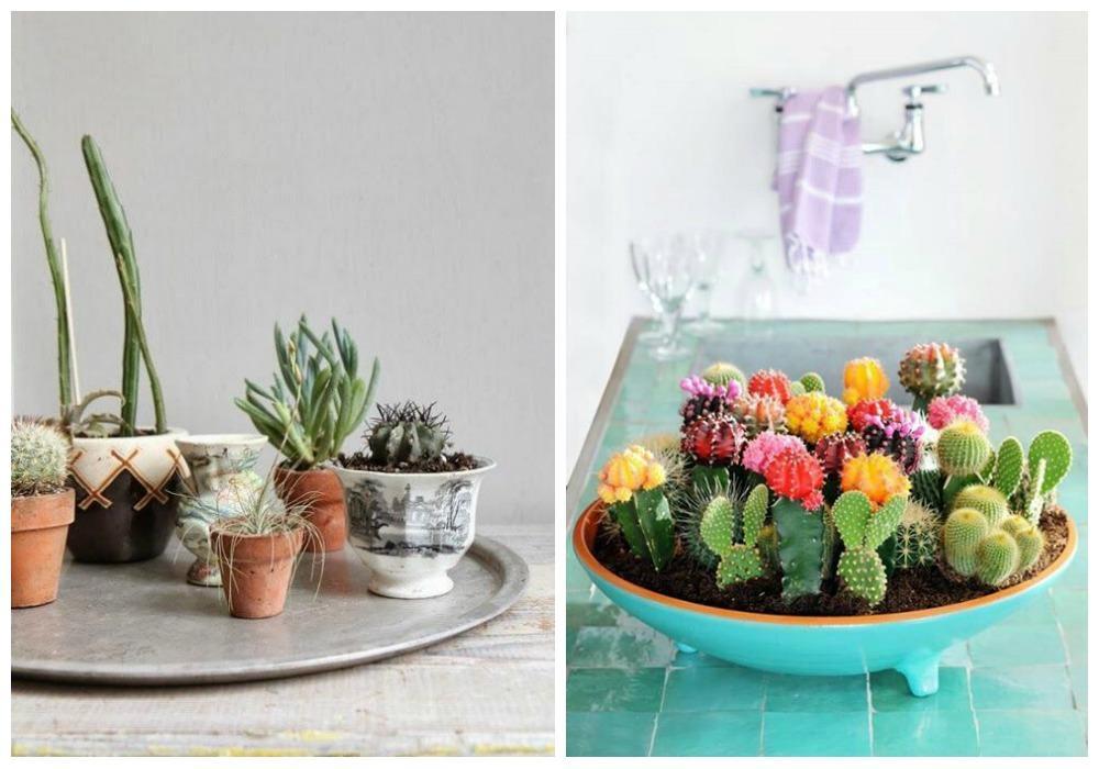 Decorar con cactus, perfectos en todas las estancias