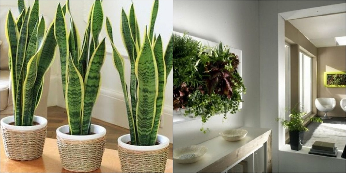 Ideas para decorar tu hogar de forma especial con plantas