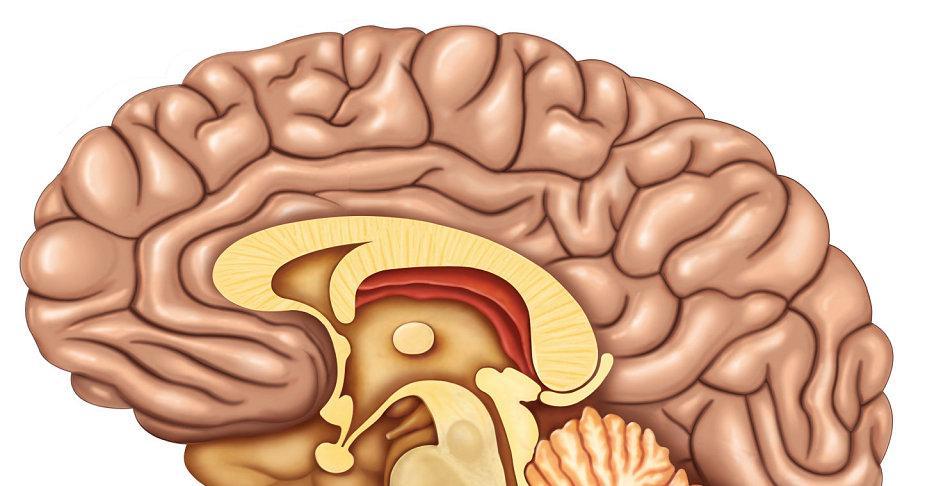 Prevención para evitar el deterioro cognitivo