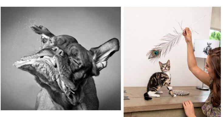 Los trucos imprescindibles para hacer buenas fotos a tu mascota