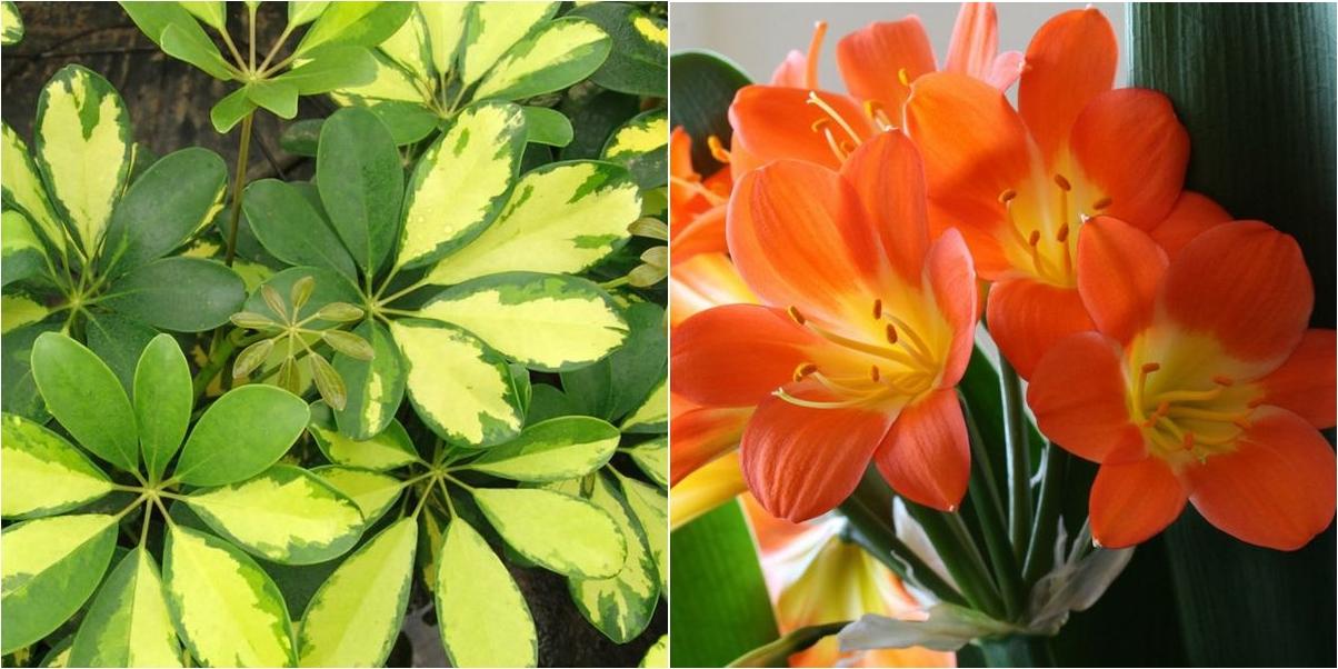 Las 5 plantas de interior m s resistentes plantas - Planta de exterior resistente ...