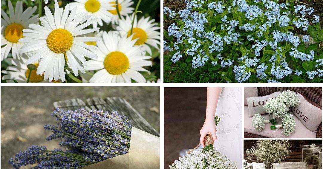 las mejores flores para regalar a nuestros seres queridos