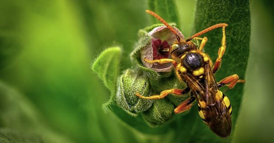 Receta con hierbabuena para espantar avispas: ¡por fin!