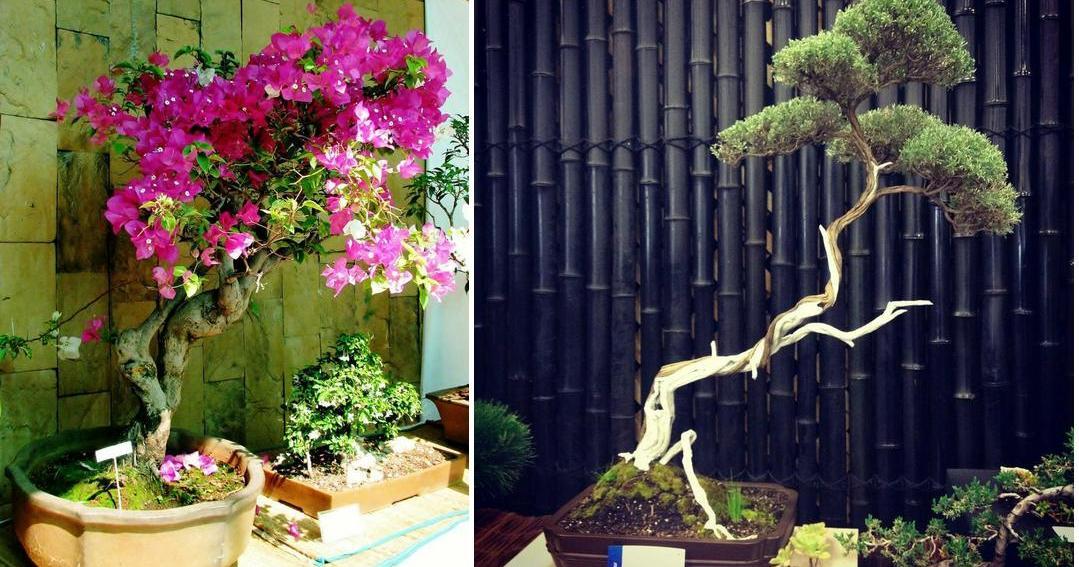 Cómo crear el bonsái de tus sueños