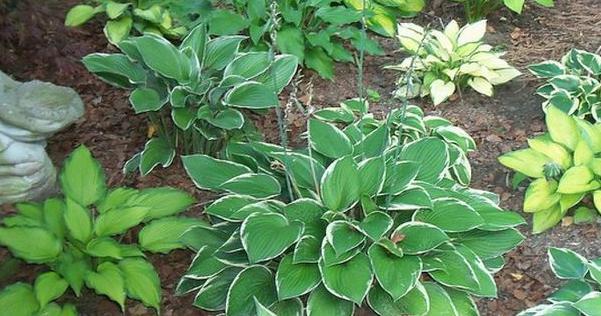 plantas que florecen en septiembre
