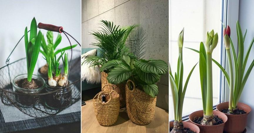 Cuidados de las plantas de interior plantas for Cuidados orquideas interior