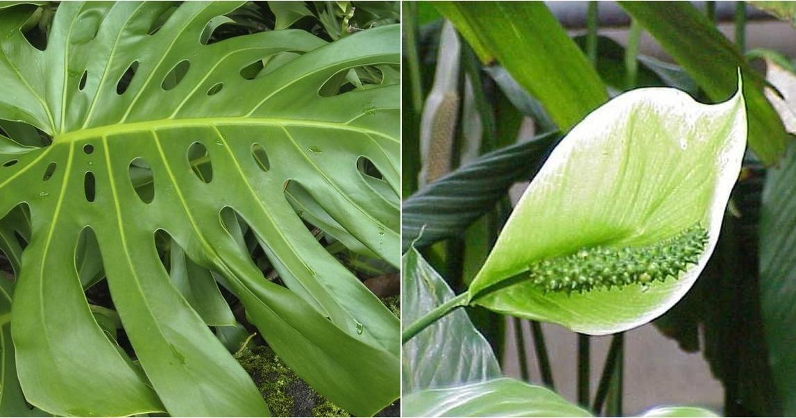 6 plantas que crecen estupendamente en condiciones de penumbra