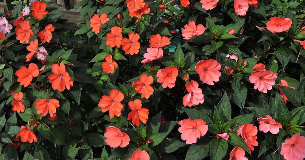 Alegr a de crecimiento y cultivo sencillo plantas for Plantas de todo el ano