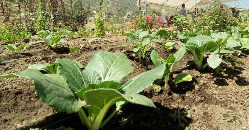 Como preparar el terreno para sembrar cesped for Preparar el huerto en invierno
