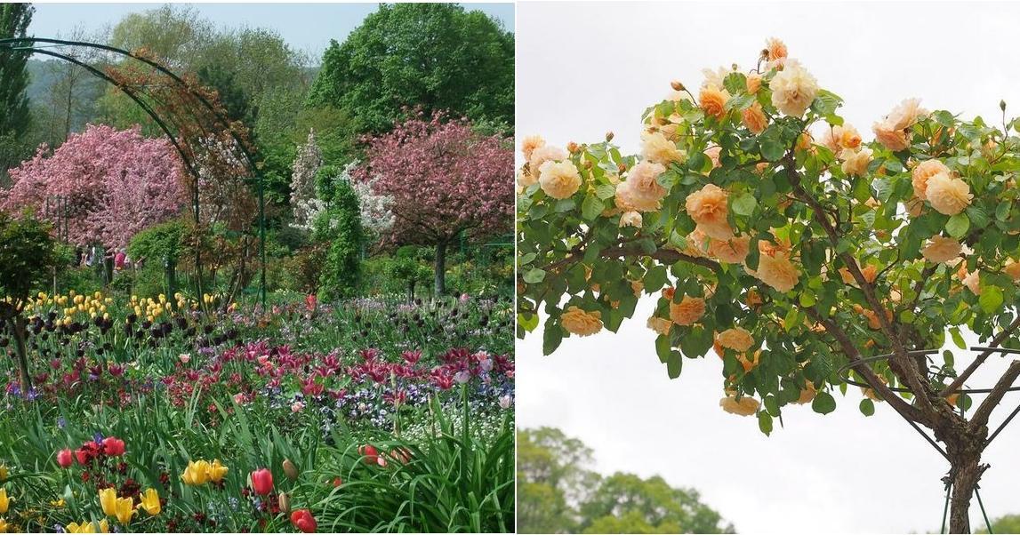 C mo crear un rbol de rosas plantas for Jardines con arboles y arbustos