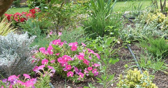Un ejemplo de jard n ingl s plantas for Ejemplos de jardines