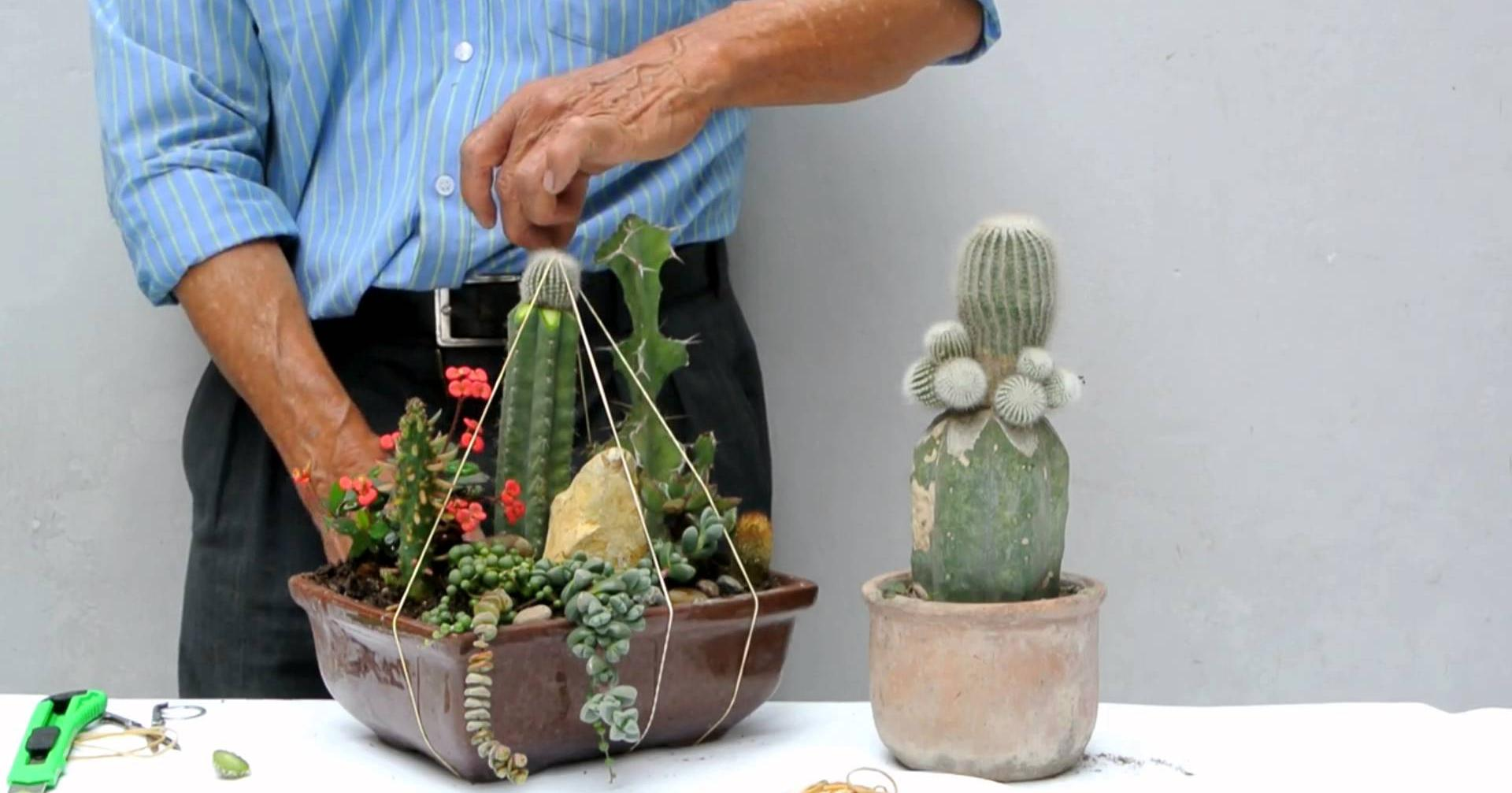 Arreglos con suculentas for Cactus y suculentas