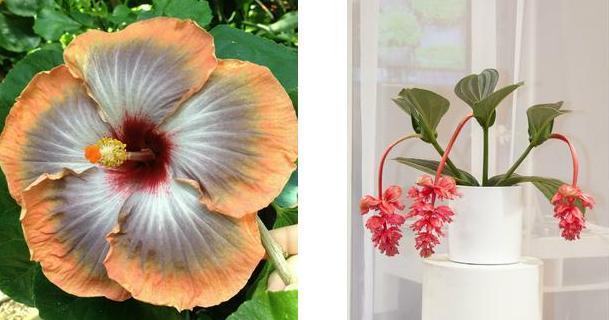 Flores Mas Bonitas Facilisimo Com
