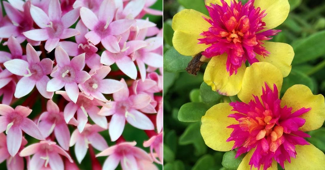 8 plantas que florecen todo el año en macetas... ¡Increíbles!