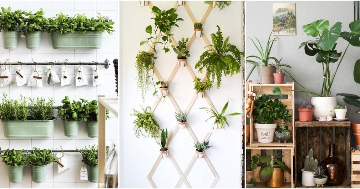 Ideas para tener un jardín interior en tu casa