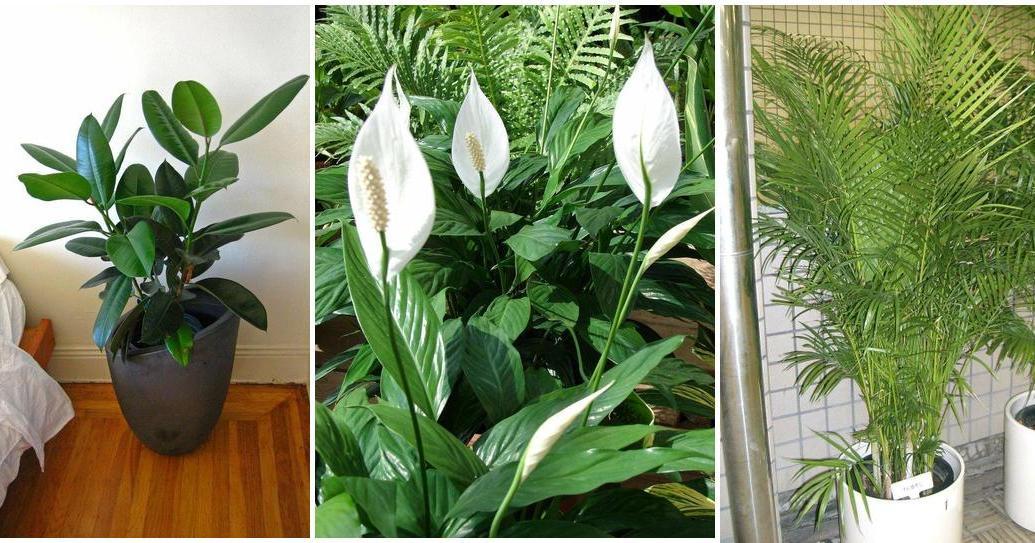 estas son las mejores plantas de interior para limpiar el aire de casa