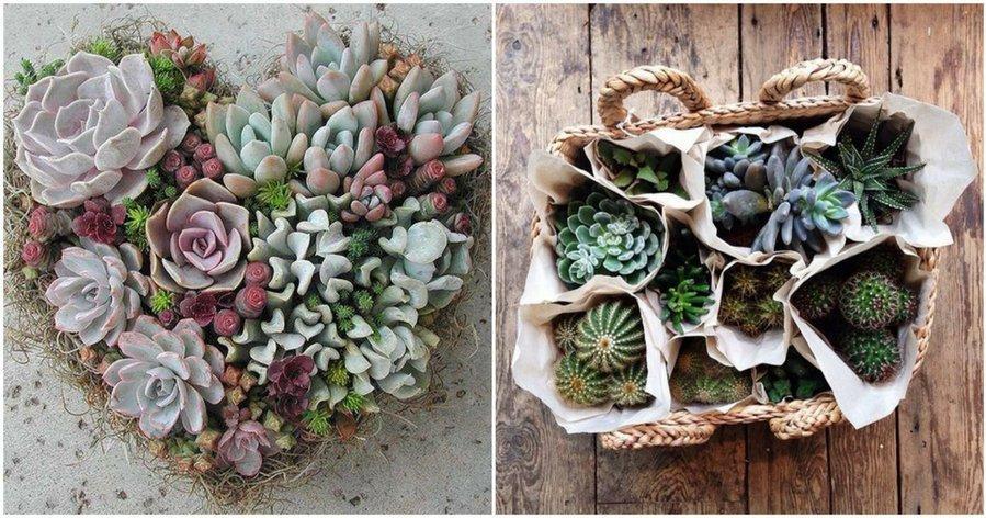 Cactus y suculentas plantas for Cactus y suculentas