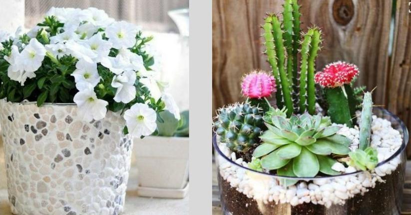 Como hacer un jardin pequeno for Jardines pequenos originales