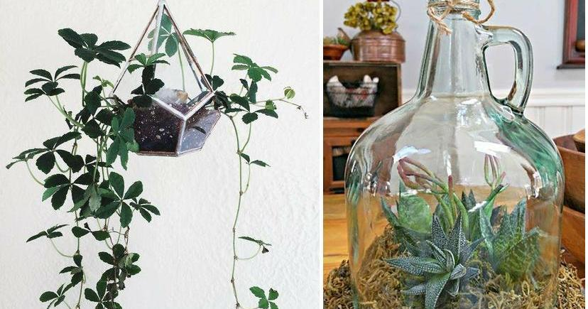 Television colgada pared for Ideas para colgar plantas