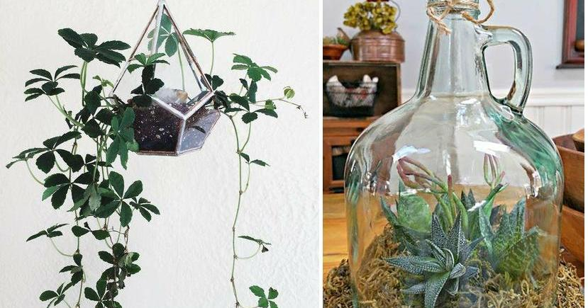 ideas para decorar tu hogar con plantas