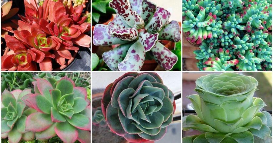 10 tipos de suculentas que quedar n hermosas en tu hogar - Tipos de plantas de exterior ...