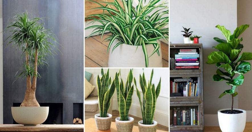 Ideas de plantas for Plantas de interior que no necesitan luz
