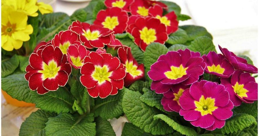 Plantas para balcones plantas para balcones y terrazas for Plantas para balcones