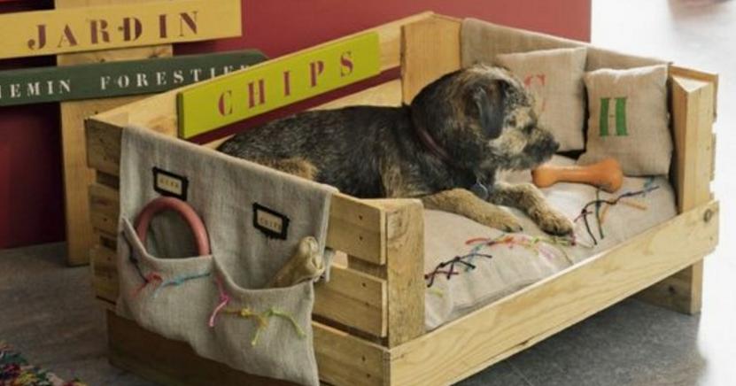 como hacer ropa para perros | facilisimo.com