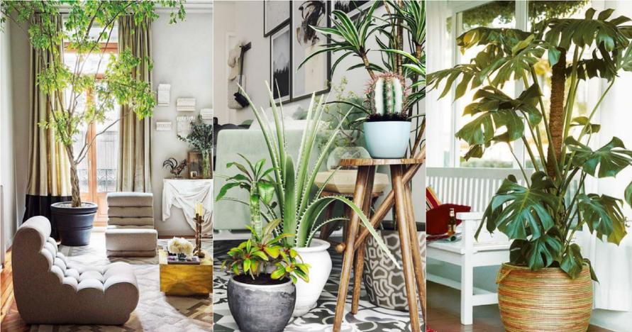 Ideas de plantas - Plantas para decorar interiores ...