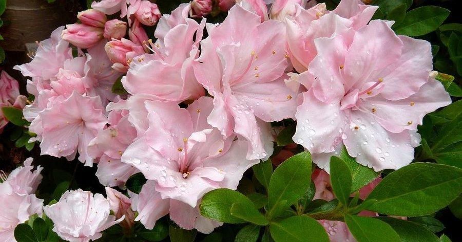 Flores De Interior Facilisimocom