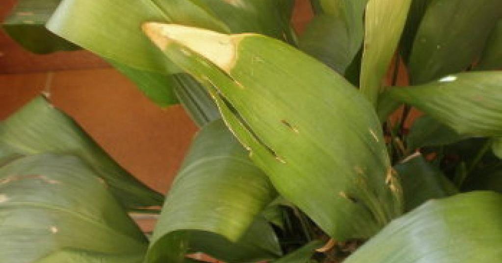 Cómo cortar las hojas secas y otros consejos para unas plantas de 10