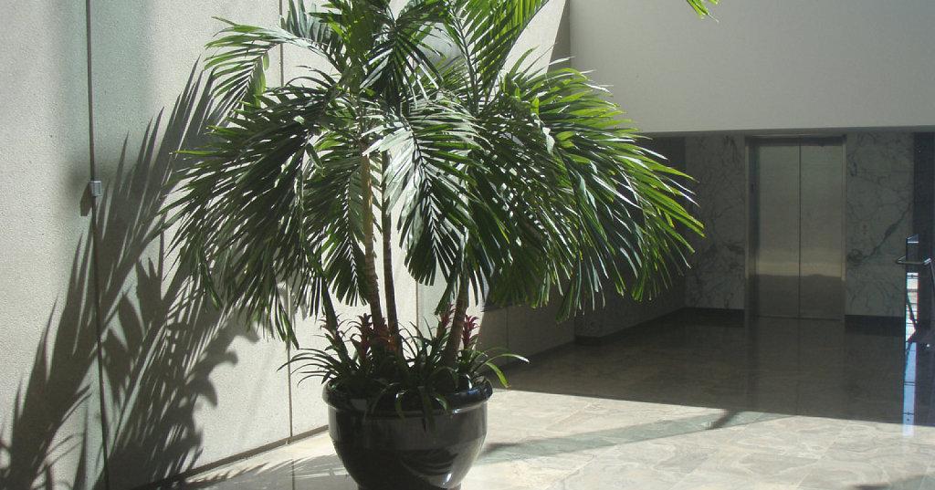 Palmeras para interiores plantas for Arbustos para interiores