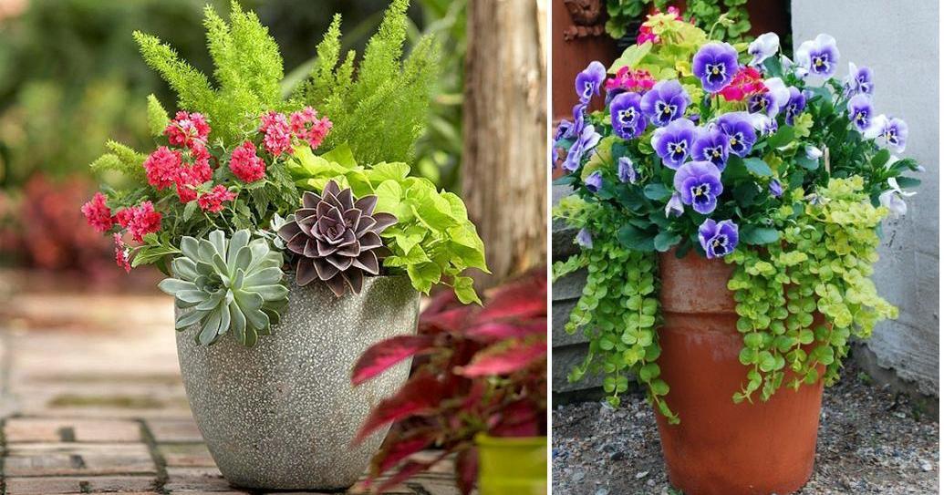 Cómo crear bonitas composiciones de flores y plantas