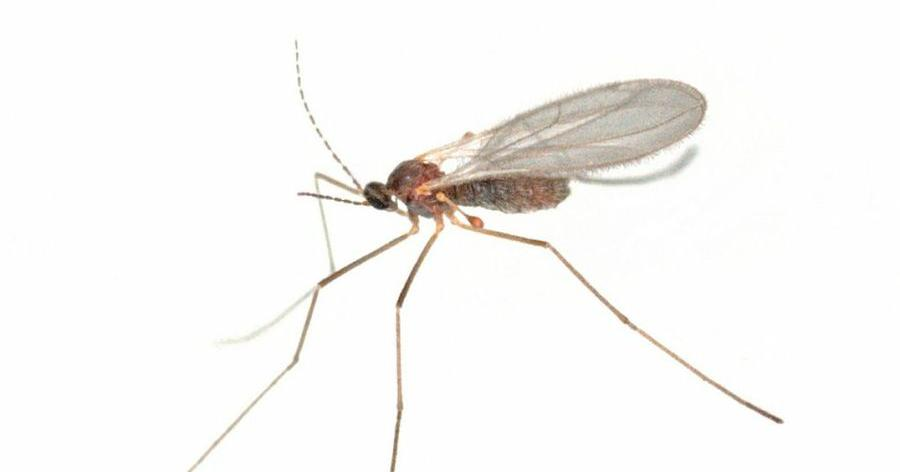 Plantas contra mosquitos - Plantas contra los mosquitos ...