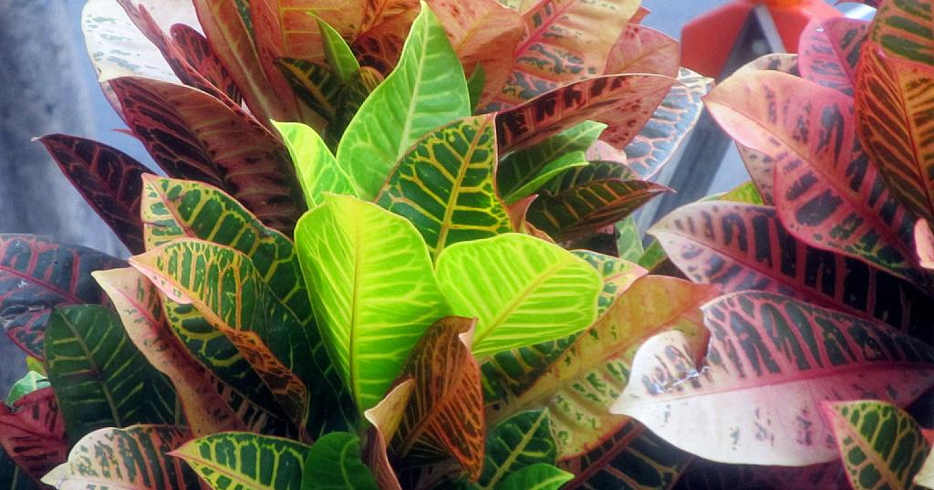 Truco para limpiar las hojas de las plantas y que estén más bonitas