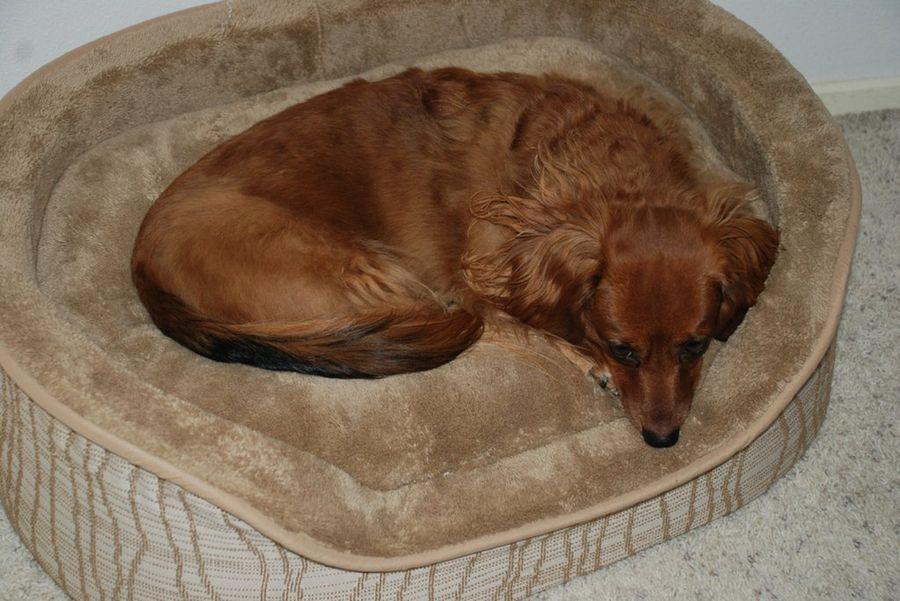 C mo hacer una cama para perros mascotas for Red transparente para gatos