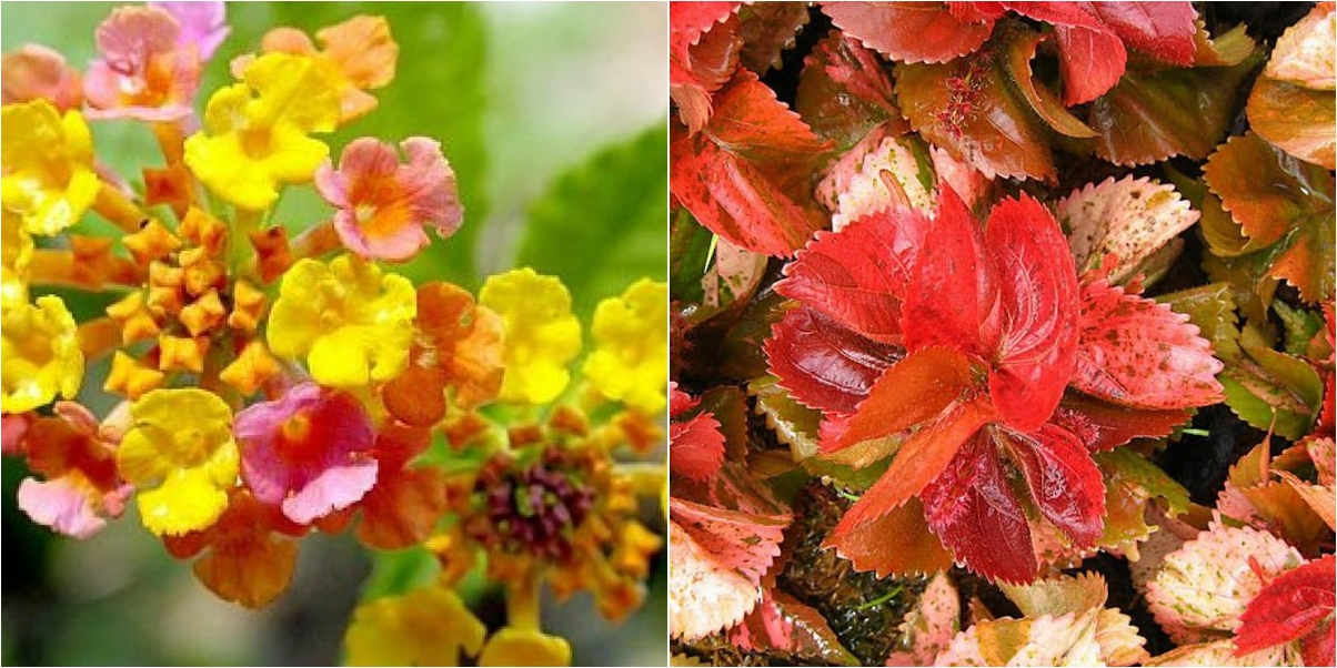 Plantas para zonas de calor y belleza extrema