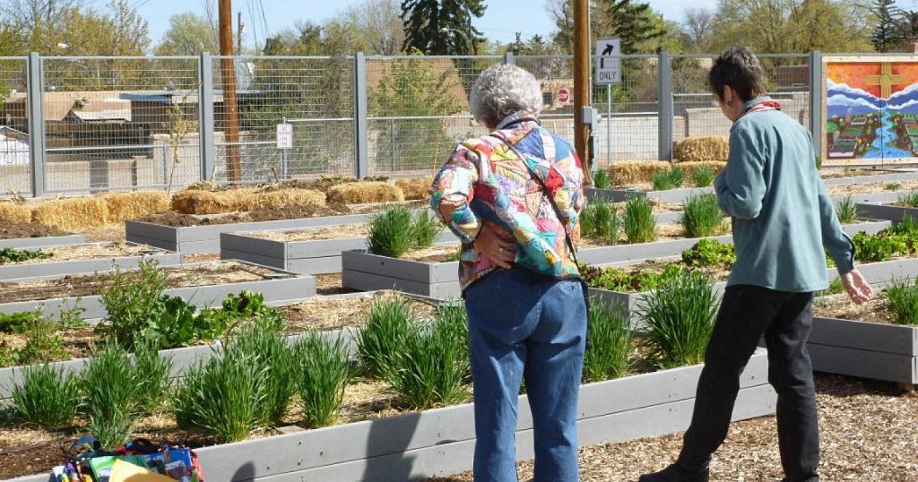 Beneficios de tener un huerto escolar plantas for Asociacion de plantas en el huerto