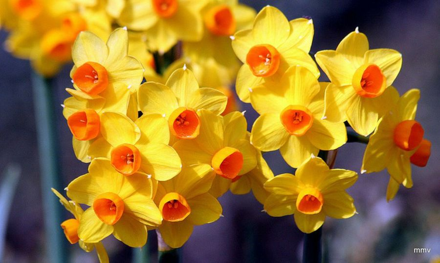 tipos de plantas ornamentales plantas