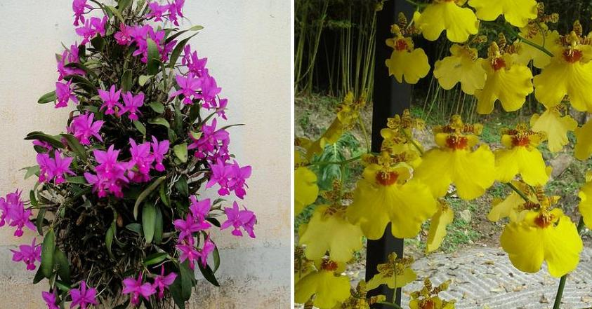 Poda de la orqu dea plantas for Cuidados orquideas interior
