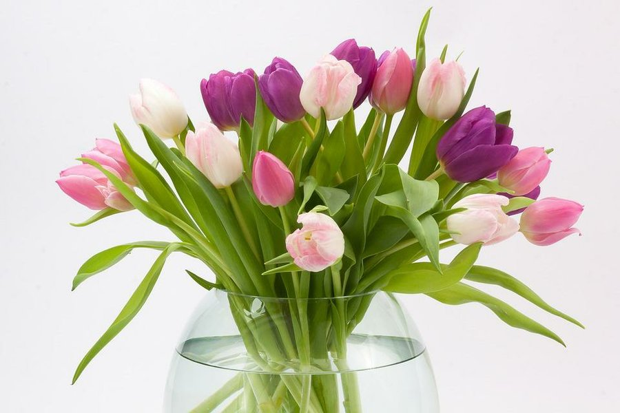 ideas para decorar con plantas y dar un toque ecolgico a tu hogar