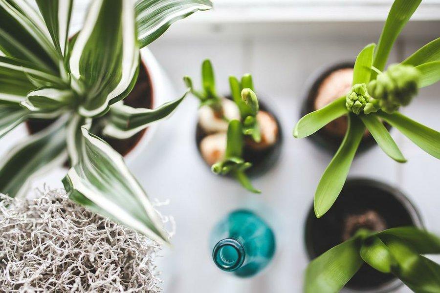 plantas de interior que apuesto lo que quieras a que no se te mueren