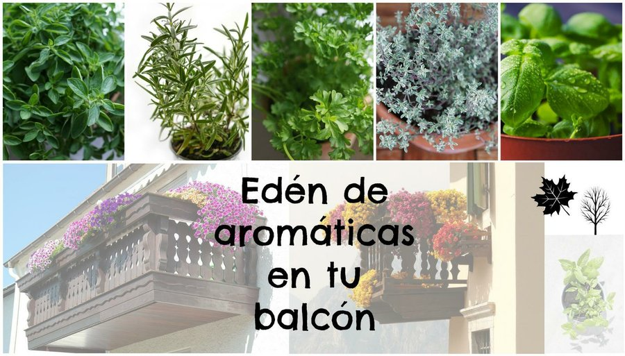 plantas aromáticas   facilisimo