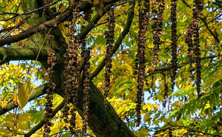 Fotos de rboles de hoja caduca plantas for Arboles de hoja caduca